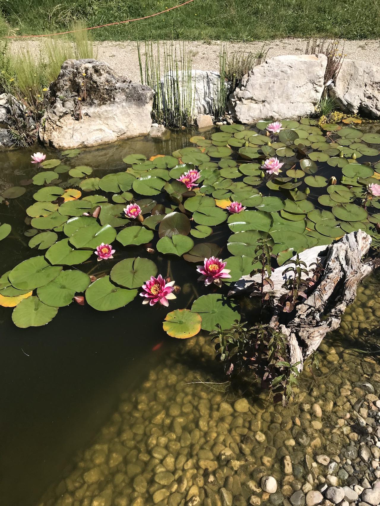 CSDK Bassin de jardin 5 1 - Engagement durable - CSDK Bassin de jardin 5 1