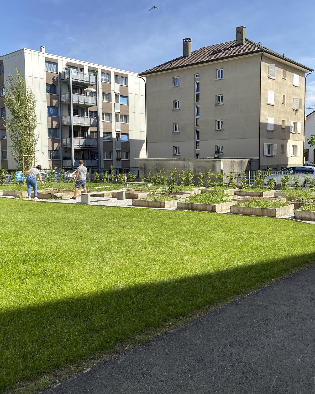 CSDK Architecte Bulle Ame%CC%81nagements 4 - Vegetable garden - Bulle - CSDK Architecte Bulle Ame%CC%81nagements 4