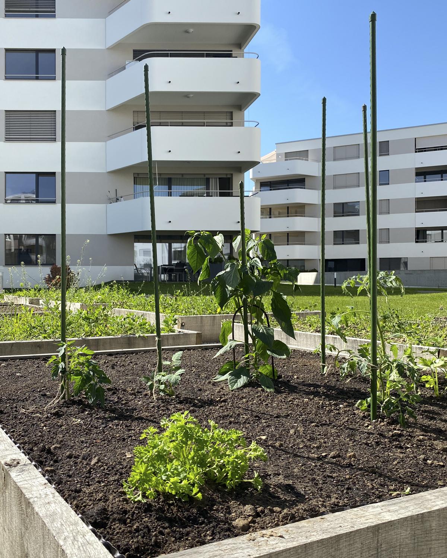 CSDK Architecte Bulle Ame%CC%81nagements 6 - Vegetable garden - Bulle - CSDK Architecte Bulle Ame%CC%81nagements 6